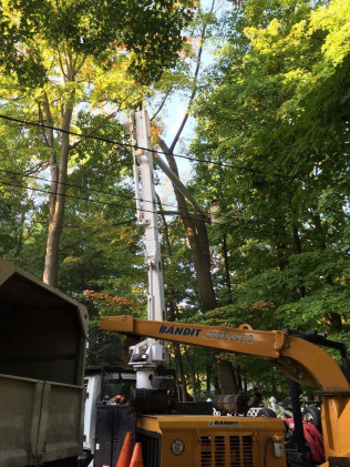 General Tree Work orchard park ny