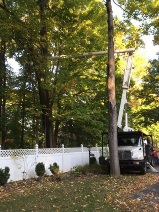 tree care services west falls ny